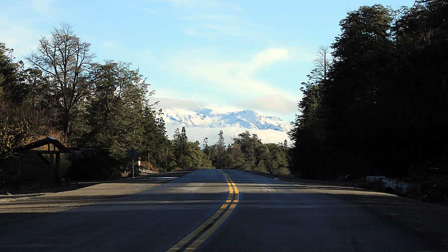 El Bosque Andino Patagonico Sufre Continuamente La Interaccion Humana